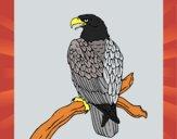 Aigle sur une branche