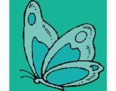 Papillon 14