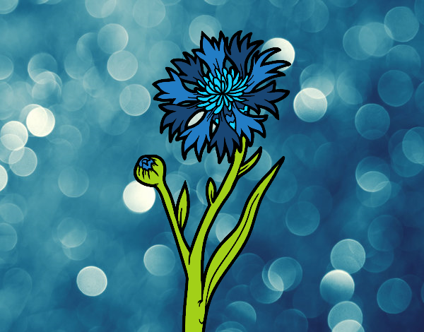 Dessin de bleuet colorie par membre non inscrit le 06 de avril de 2018 - Coloriage fleur bleuet ...