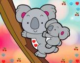 Mère koala