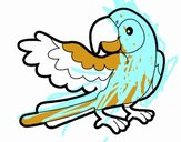 Perroquet avec wideout