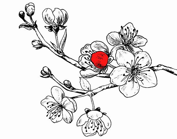Dessin De Branche De Cerisier Colorie Par Membre Non Inscrit Le 29 De Aout De 2019 A Coloritou Com