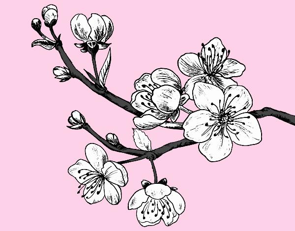 Dessin De Branche De Cerisier Colorie Par Membre Non Inscrit Le 19 De Decembre De 2019 A Coloritou Com