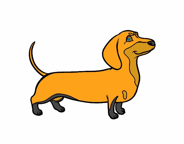dessin de chien teckel colorie par membre non inscrit le