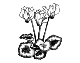 <span class='hidden-xs'>Coloriage de </span>Cyclamen à colorier