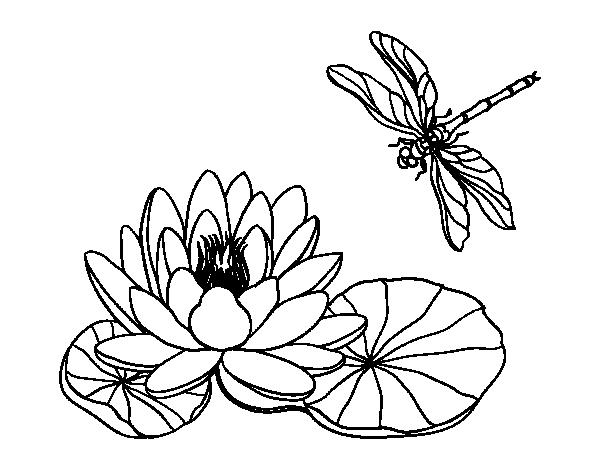 Coloriage De Fleur De Lotus Pour Colorier Coloritou Com