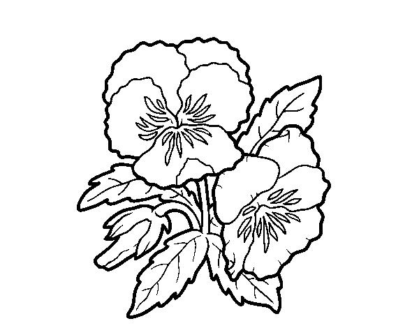 Coloriage De Fleur De Pensee Pour Colorier Coloritou Com