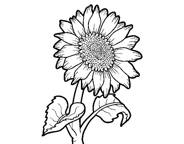 Coloriage de fleur de tournesol pour colorier - Dessin de tournesol ...