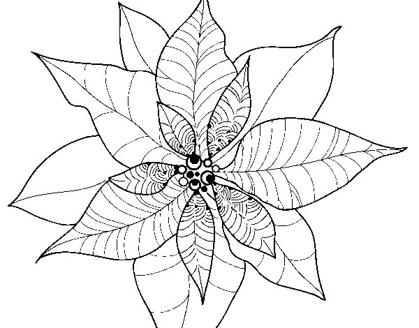 Coloriage de Fleur en poinsettia pour Colorier , Coloritou.com