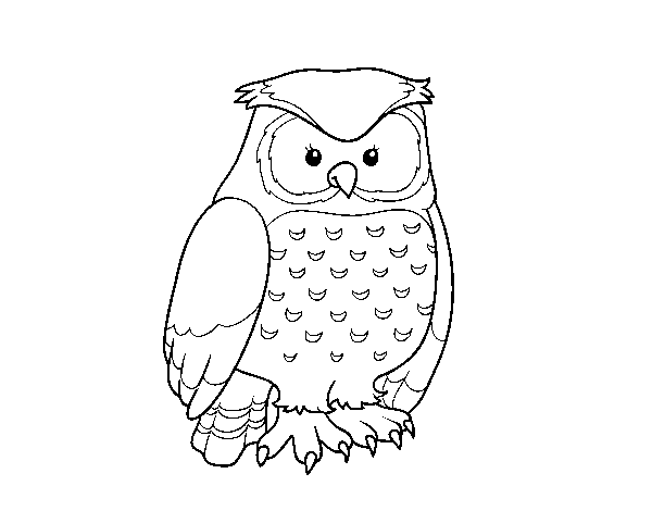 Coloriage de Hibou adulte pour Colorier