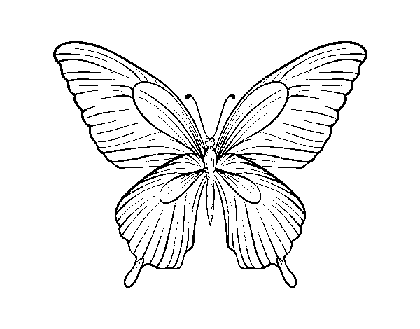 Coloriage de Papillon tropical pour Colorier