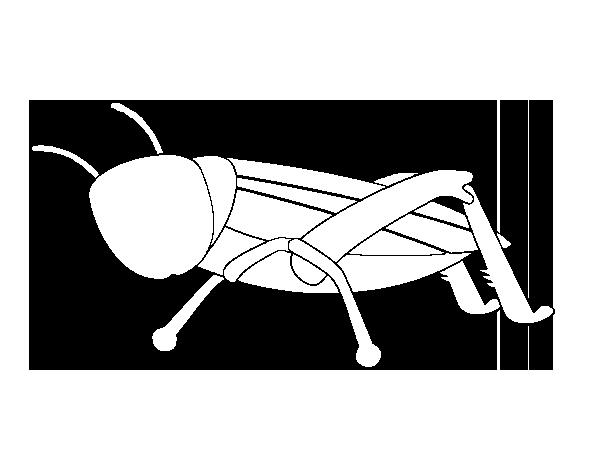 Coloriage de sauterelle jeune pour colorier - Sauterelle dessin ...