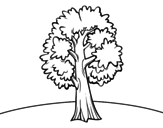 <span class='hidden-xs'>Coloriage de </span>Un érable à colorier