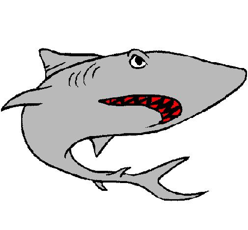Dessin De Requin Colorie Par Membre Non Inscrit Le 09 De Avril De