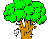 Coloriage Brocoli colorié par fabien